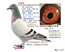 15秋北京正明特比四关综合殿军