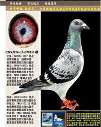"""台湾赖铭居传奇""""克拉克05"""""""