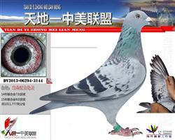 鸽王家族3144