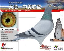 鸽王家族2505