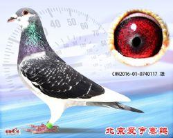 11、CHN2016-01-0740117-雄副本 (1)