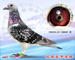 13、CHN2016-01-1580087-雄副本 (1)