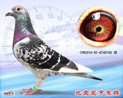 16、CHN2016-01-0740106-雄副本 (1)
