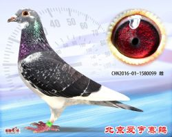 17、CHN2016-01-1580099-雌副本 (1)