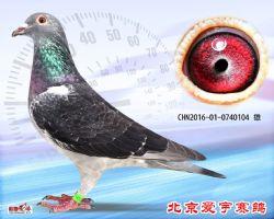 19、CHN2016-01-0740104-雄副本