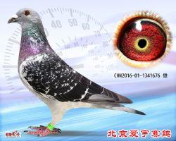 20、CHN2016-01-1341676-雄副本 (1)