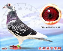 21、CHN2016-01-0740118-雌副本 (1)