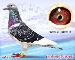 22、CHN2016-01-1341681-雄副本 (1)