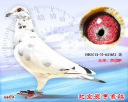 28、CHN2013-01-641657-雄副本 (1)