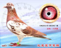 24、CHN2016-01-0853967-雌副本 (1)