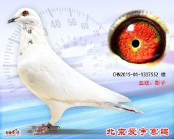 26、CHN2015-01-1337552-雄副本 (1)