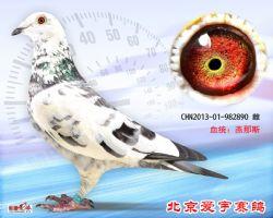 29、CHN2013-01-982890-雌副本 (1)