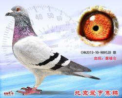 30、CHN2013-10-909520-雌副本 (1)