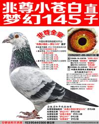 苍白骑士王牌梦幻145直子【兆尊金童】