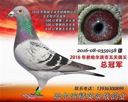 2016年秋哈尔滨市五关特比总冠军(售)