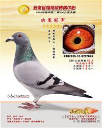 """安徽福禄缘决赛冠军""""禄祺826"""""""