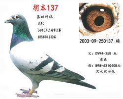 胡本137