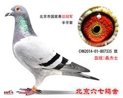 北京市国家赛总冠军半平辈