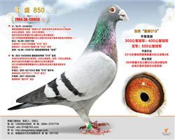 江盛850
