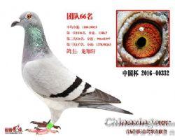 ▲北京.百鸽园联盟杯团队综合鸽王66名.