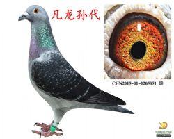 CHN2015-01-1205051--雌