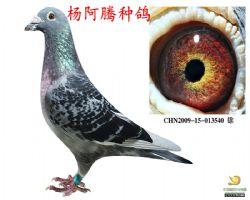 CHN2009-15-013540--雄