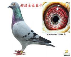 CHN2010-06-379918--雄