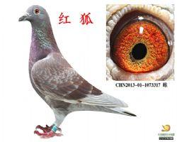 CHN2013-01-1073317--雌