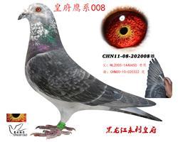 皇府鹰系008
