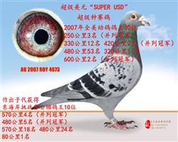 """超级美元""""SUPER USD"""""""