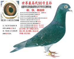 长江道1号鸽业