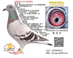 CHN2016-13-0029830