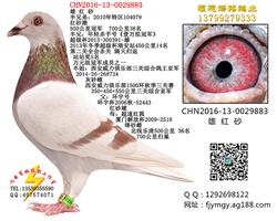 CHN2016-13-0029883