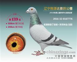 辽宁翔源达公棚决赛139名已售出