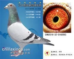 辽宁胜凯公棚决赛473名已售出