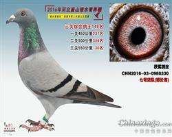 2016银水综合鸽王149