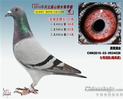2016银水综合鸽王125