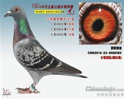 2016银水综合鸽王121