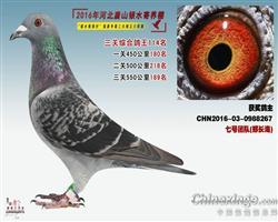 2016银水综合鸽王114
