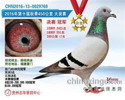 贵州志华公棚冠军《第十届秋季》2016