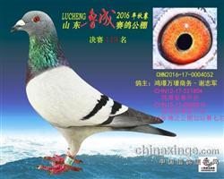 CHN16-17-0004052