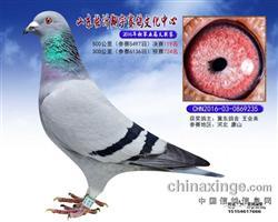 山东翔宇决赛119名