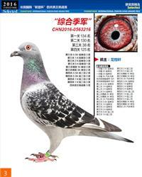 .2016年.秋季.长阳国际四关综合季军