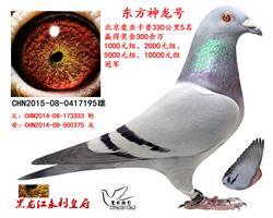 北京爱亚卡普百万名鸽