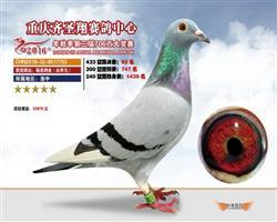 金牌汤姆*永胜540