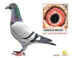 CHN09-01-981323 拷贝_看图王