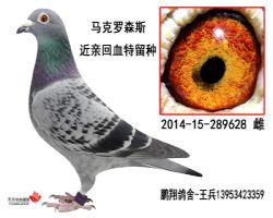 马克2014-15-289628雌