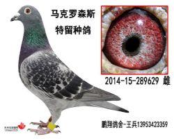 马克2014-15-289629雌