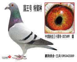 中鸽协会三十周年-3073499雄
