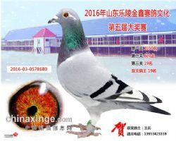 2016-03-0578680灰白条黄_s